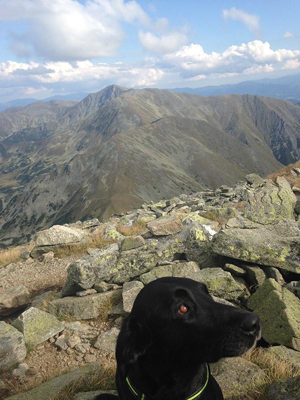 Hundegestützte Psychotherapie mit Juna